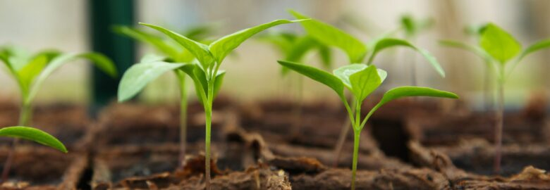 Green Vegetable Seeds
